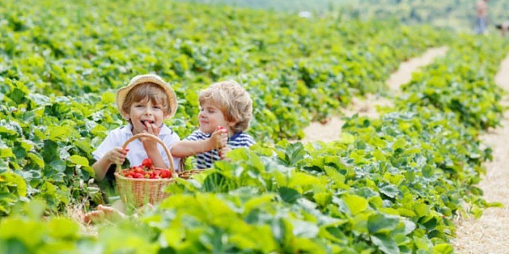 Let Kids Grow - In The Garden! - Scott Darling Real Estate