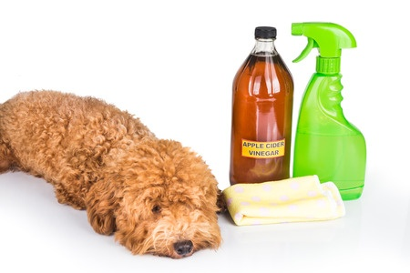 You must eliminate pet odor to sell your home!