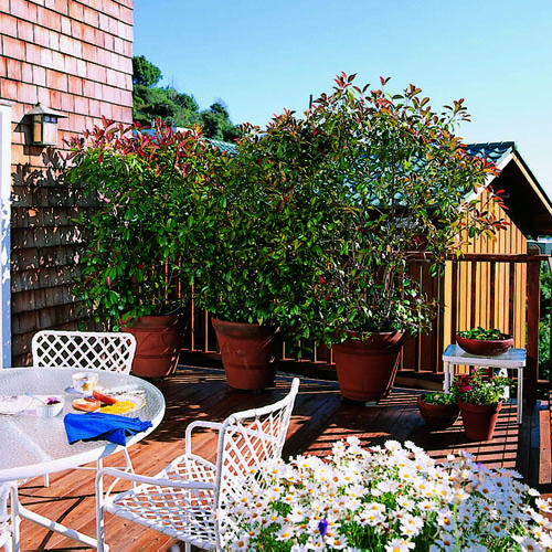 Appealing Plants That Create Privacy Photos - Best idea home ...
